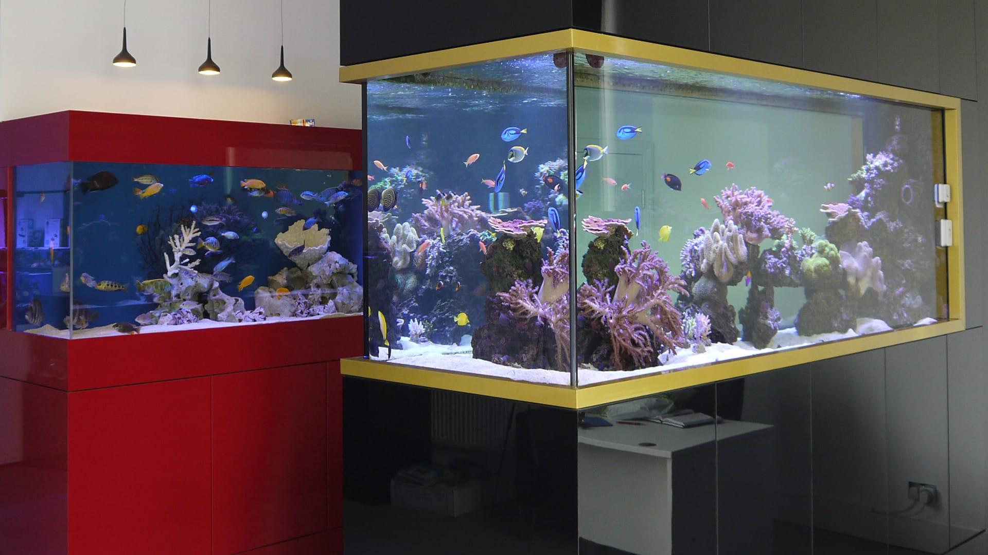 Seashell Aquariums Ltd 1000 Aquarium Ideas